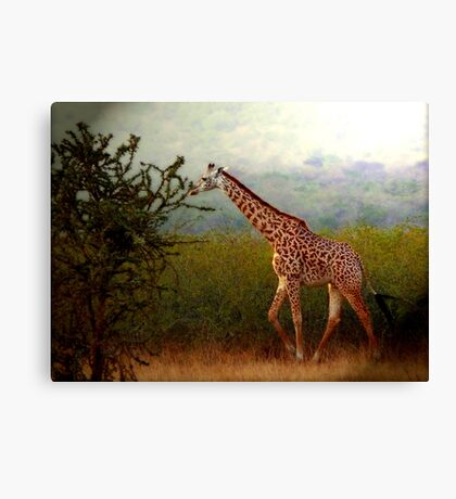 Tallness Canvas Print