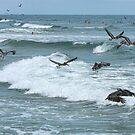 Pelican Madness by Deborah  Benoit