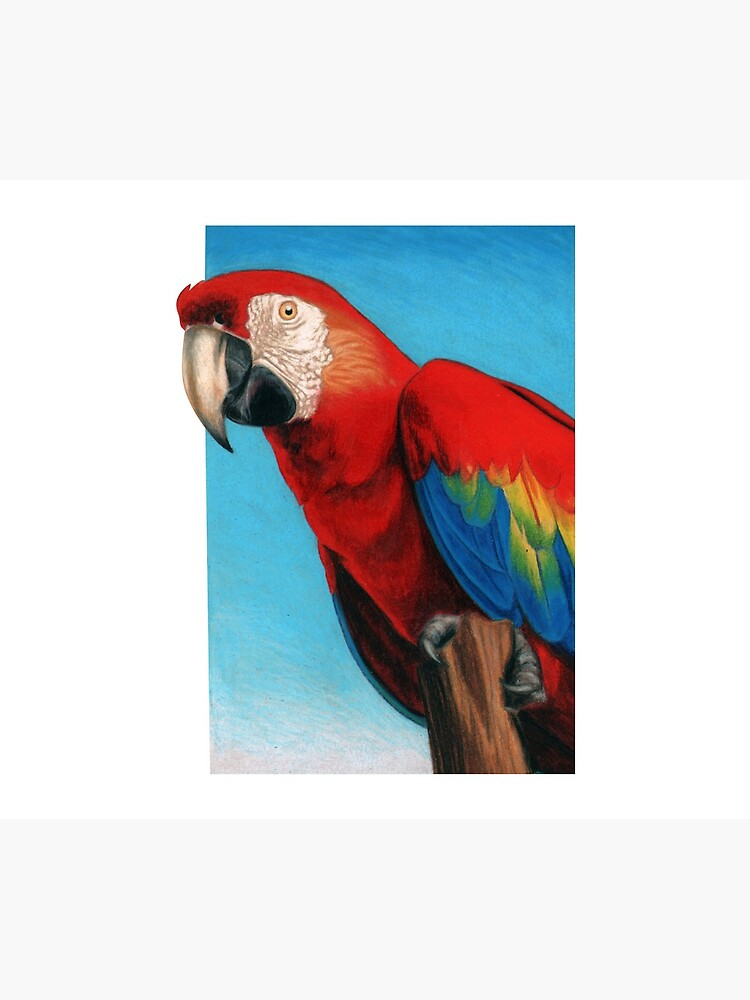 Scarlet Macaw art by Artist Sherrie Spencer by serrynawolfe