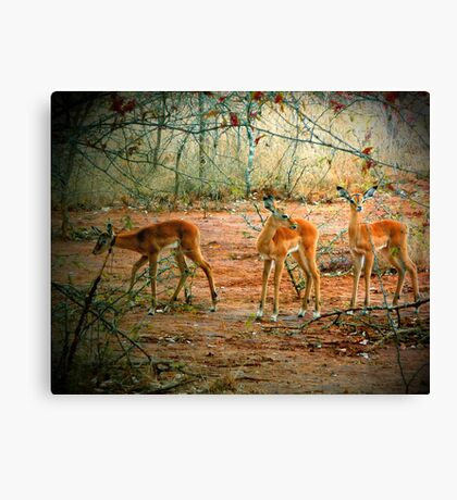 Three Friends Canvas Print