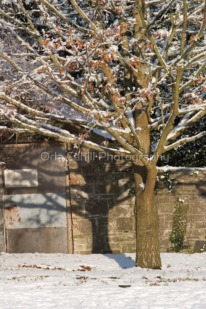 A Snowy Tree Bathed in Sunlight   by Orla Cahill Photography