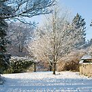 Delicate Snow Tree   by Orla Cahill Photography