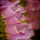False dragonhead flowers by Celeste Mookherjee