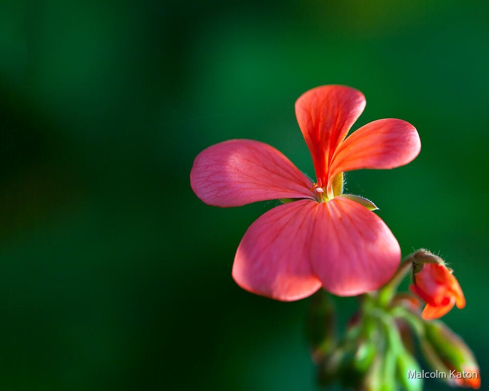Garden Beauty by Malcolm Katon
