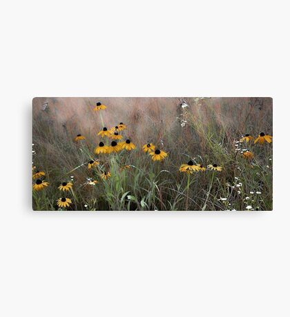 The Meadow --Black Eyed Susan Canvas Print