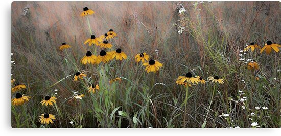 The Meadow --Black Eyed Susan by T.J. Martin
