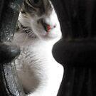Peek a boo by Samantha Aplin