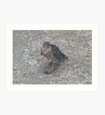 What's a Sparrowhawk Supposed to Do? Art Print