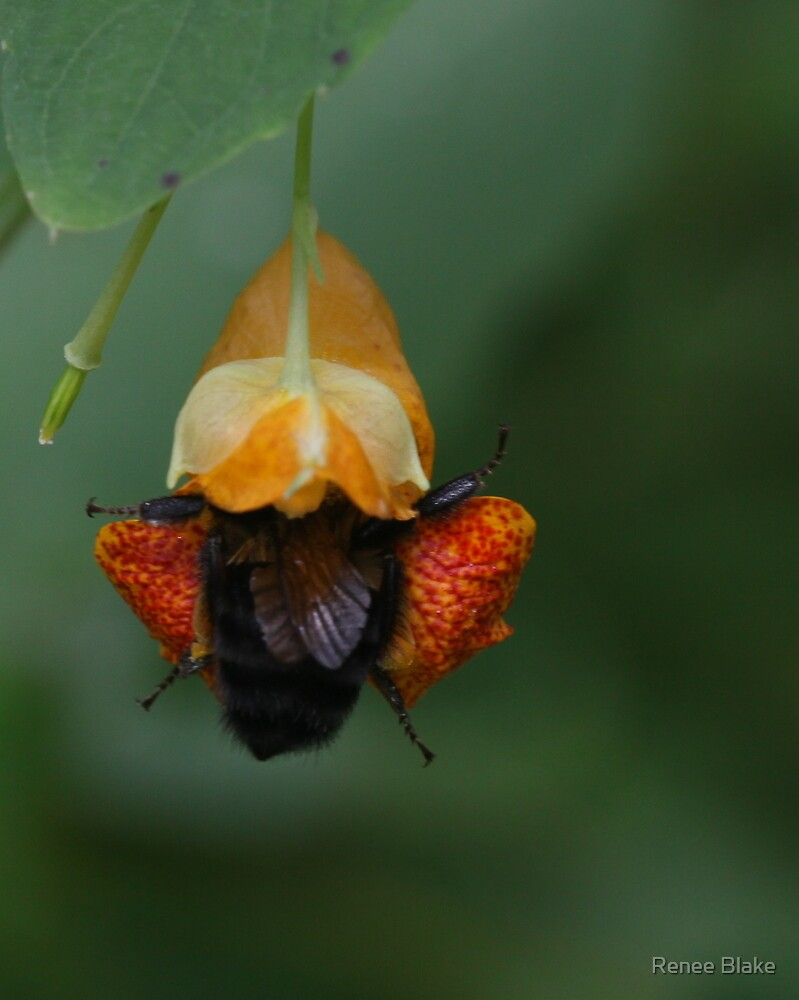 """"""" I'm A Little Bee-Hind On My Work """" by Renee Blake"""
