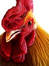 Rooster Doodle Doo  by Marcia Rubin