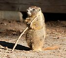 The marmot and the stick by Anthony Brewer