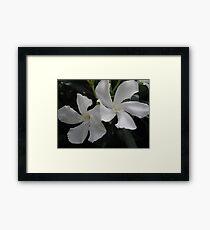 Bocian's Flowers Framed Print