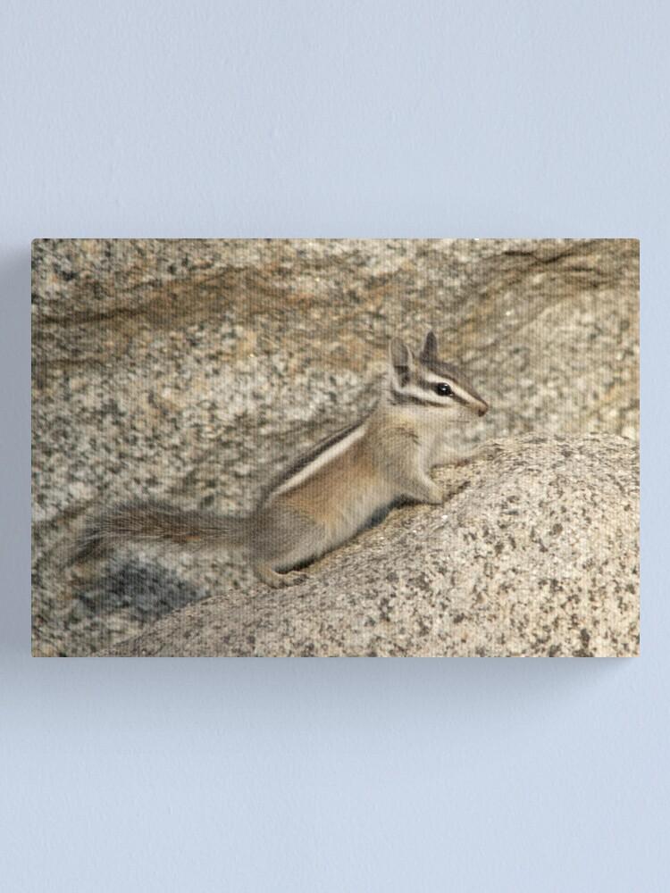 Alternate view of Chipmunk rock Canvas Print