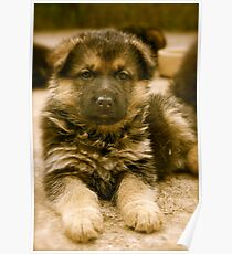 How To Be Cute (German Shepherd Puppy) Poster