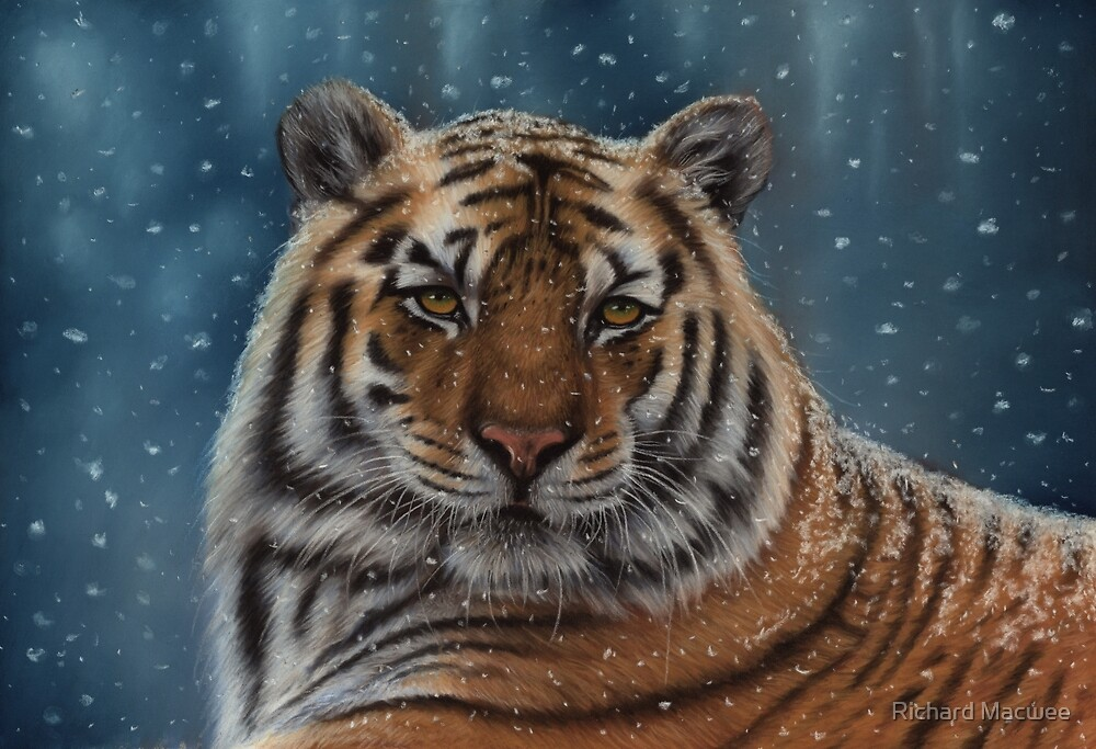 Tiger in the Snow by Richard Macwee