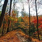 Fall Impression of the Swamp Path, Great Falls Park VA by Bine