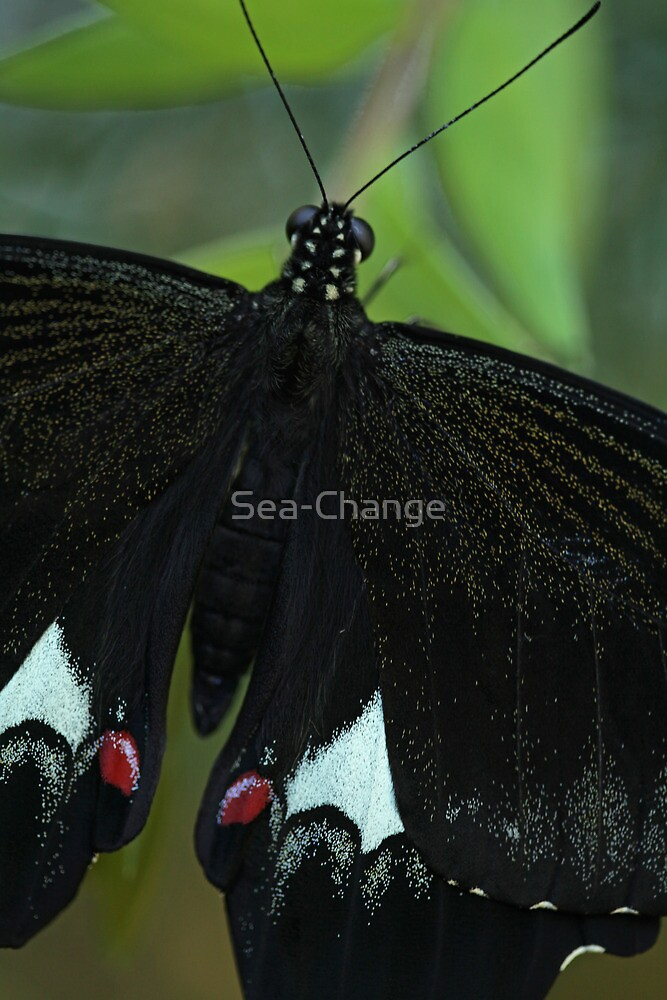 Superb Colourful Butterfly by Sea-Change