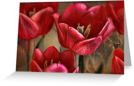 Tulip Abstract by Lynda Heins