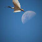 The Ibis & the Moon by Dean Gerrard