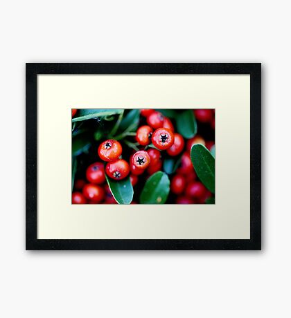 Berry Red Framed Print