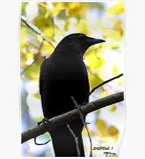 Black and Yellow beauty Poster