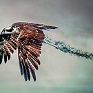 Osprey with Spanish Moss by Brian Tarr