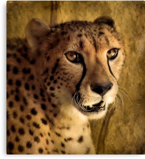 Cheetah by SuddenJim
