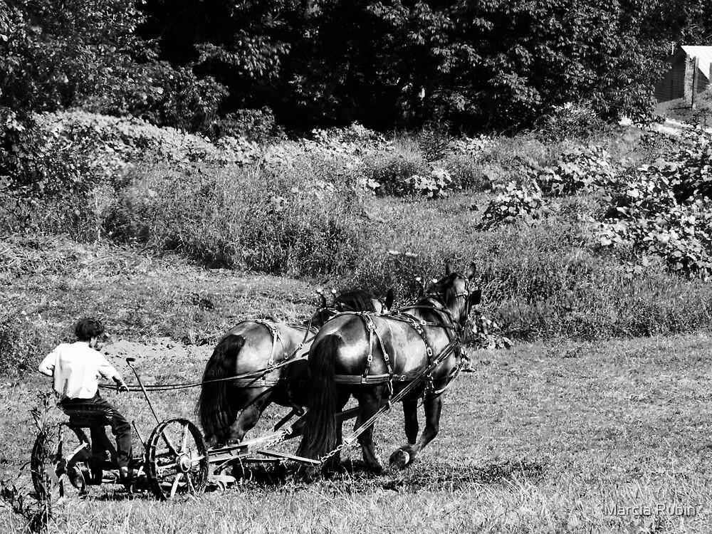 Plowing the Field  by Marcia Rubin