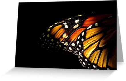 Monarch Butterfly Wing by Tamara  Kenneally