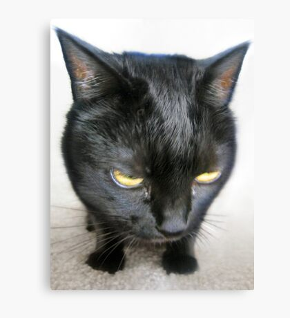 Cranky Kitty Canvas Print