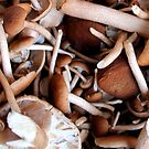 Chestnut Mushrooms by Janie. D