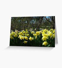 Bobbing Daffodils Greeting Card