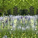 Wild About Wildflowers by jennyjeffries