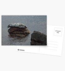 Seal on Rocks at Lime Kiln Park 2 Postcards