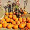 PUMPKINS/GOURDS WITH A  SCARECROW