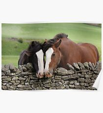 Two Shire Horses - Moffat Poster