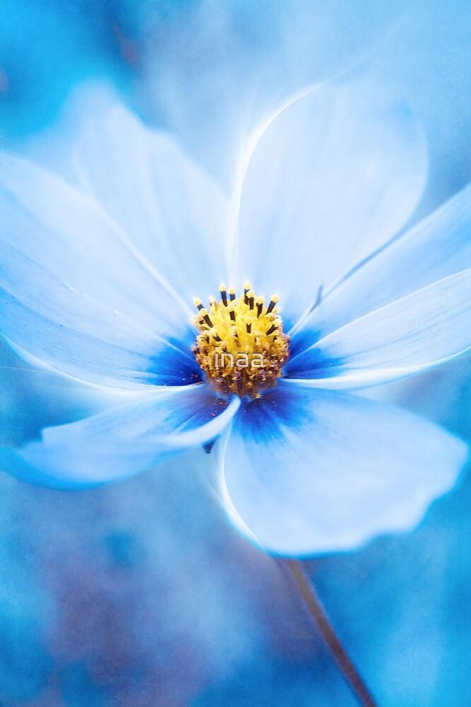 Midnight Blue by VIA INA