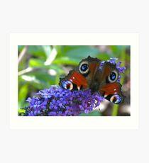 Butterfly - Schmetterling Art Print