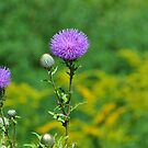 Thistle by MaryLynn