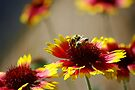 Busy Bees by Vicki Pelham