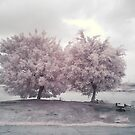 ir _ trees by hkavmode