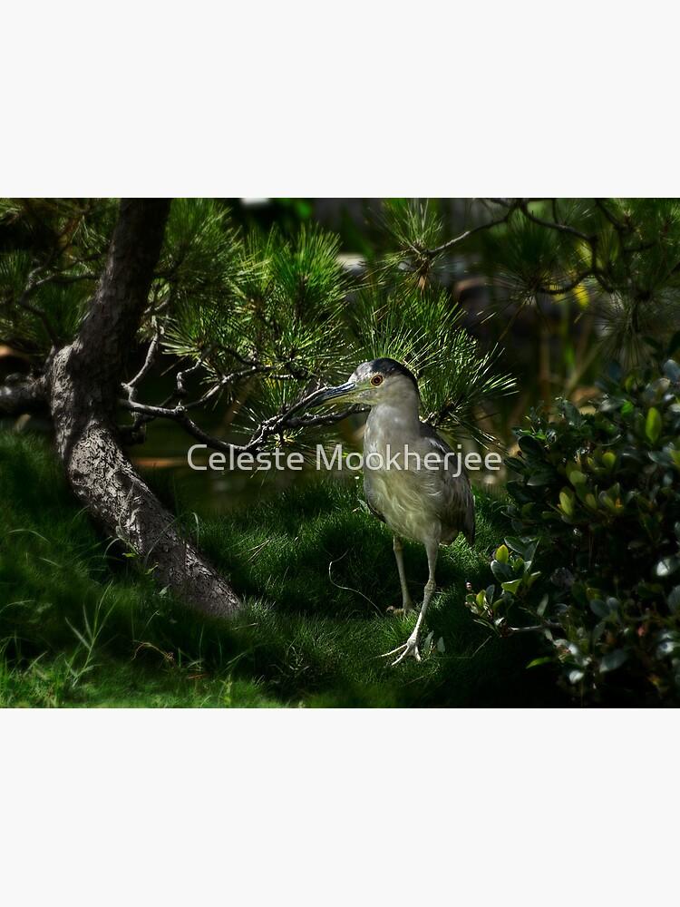 Heron schaut sich neue Ausgrabungen an von celestem