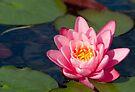 Sunlit Pink by KBritt