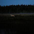 Wolf by Per E. Gunnarsen
