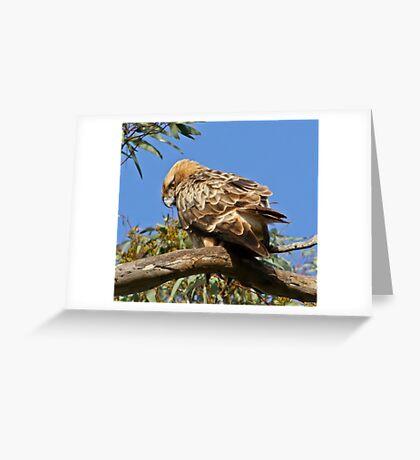 Little Eagle( Hieraaetus morphoides) Greeting Card
