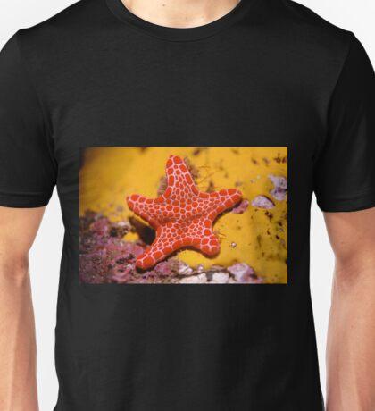 Vermilion Biscuit Star T-Shirt