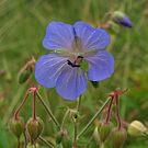 Purple Wild Flower. by Lee d'Entremont