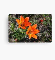 Rocky Mountain Lily Canvas Print