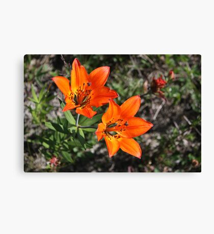 Rocky Mountain Lily Canvas Print