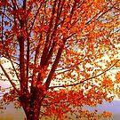 Fall  by Kristina R.